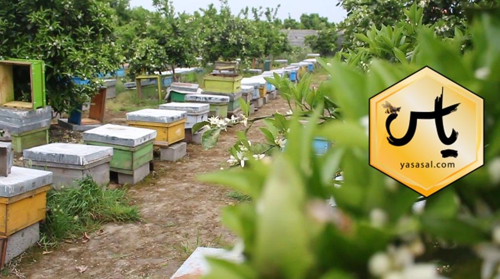 قیمت بره موم زنبور عسل