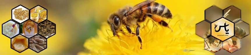 عسل یاس