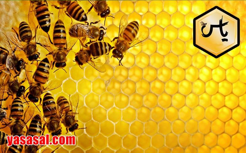 فروش موم عسل